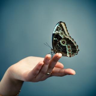 Butterflyhands13_SS