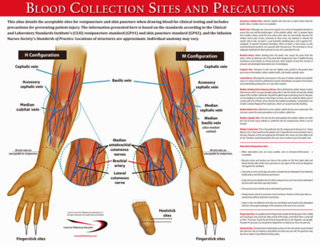 AnatomyPoster2015_400w