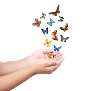 Butterflyhands19